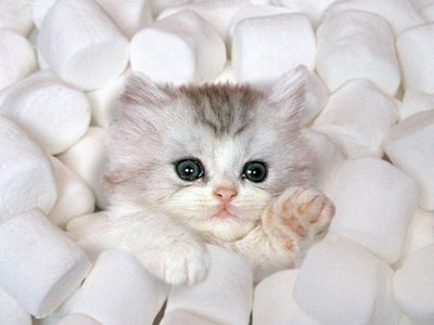Join the KW cat revolution! Do it for this adorable kitten!